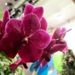 La passion des orchidées reprend vie ce week-end à la ferme du Vieux-Pays