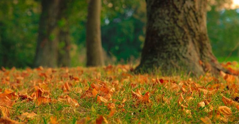 Les forêts, parcs et jardins revêtent leurs couleurs d'automne depuis maintenant quelques semaines. | (C) Catherine Grenouillat