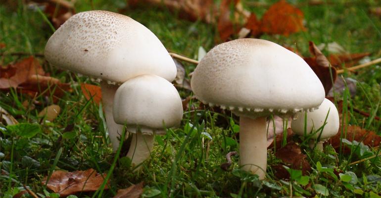 Souvent mal connus, les champignons sont présents sur toutes les terres. | (C) DR