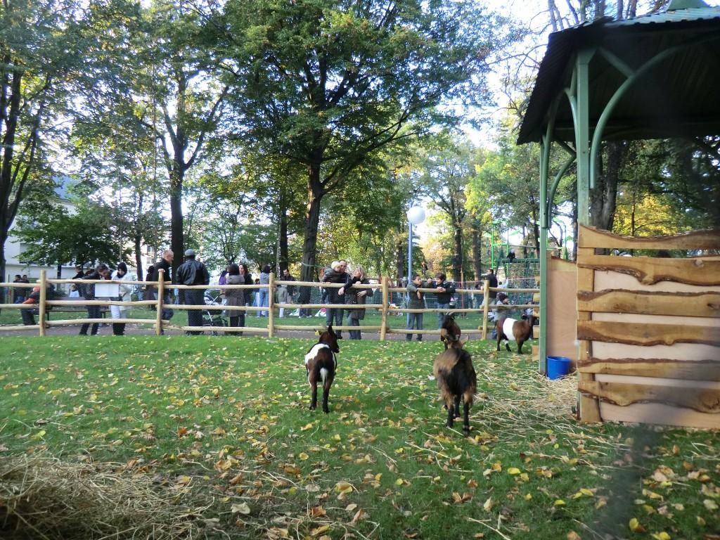 La Fête de l'Arbre attire à chaque édition plus de 10 000 personnes au Parc Dumont. | © 93600INFOS.fr / Alexandre Conan