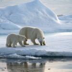 La Maison de l'Environnement lance cette semaine une exposition sur la fonte des glaces