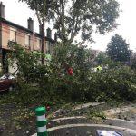 Plusieurs chutes d'arbres à Aulnay-sous-Bois suite aux orages